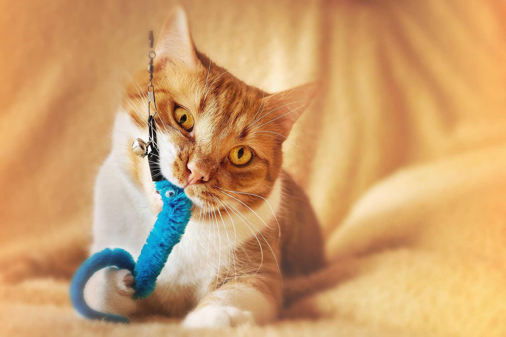 Kedilerle Oynanabilecek Oyunlar