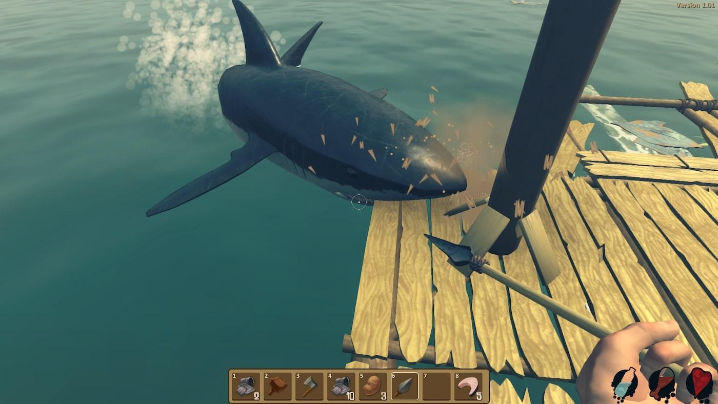 raft köpek balığı